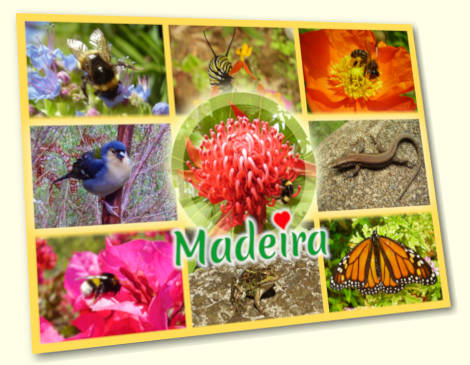 Animals of Madeira postcard